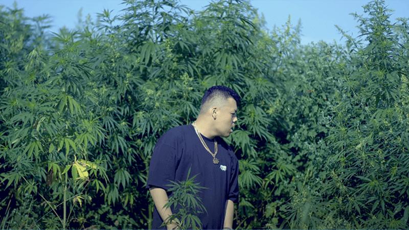 舐達麻 大麻栽培
